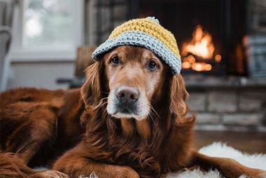 pets in winter